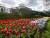 Tulpen vor den Gewächshäusern